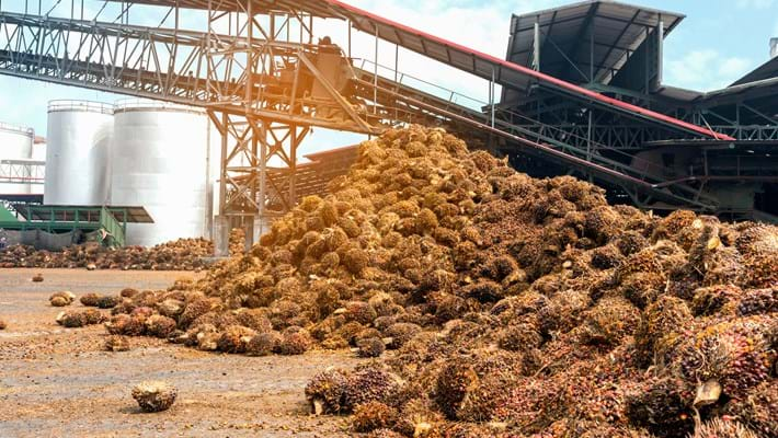 Palm Oil Processing SIG